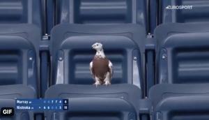 US Open bird